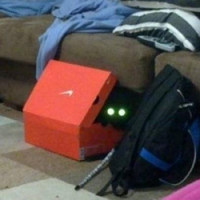 25 gatos que não são bons em esconde-esconde...