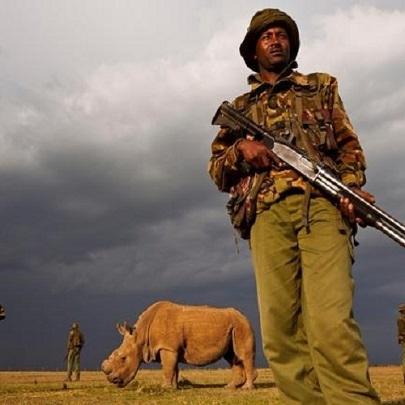 Rinoceronte tem que ser vigiado 24h por dia, d...