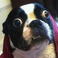 Fotos mais engraçadas e loucas de cachorros