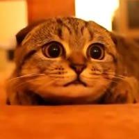 Gato com foco na conversa