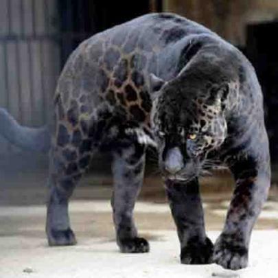 Desordens genéticas bizarras em Animais!