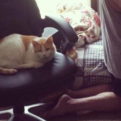 Os gatos são os animais mais abusados do mund...