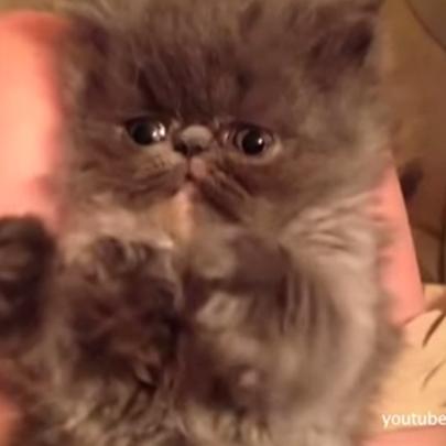 Quando os cachorros e gatos caem de sono (mome...