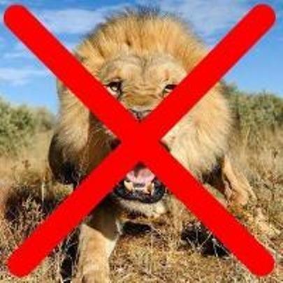 Conheça o animal mais perigoso do mundo