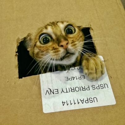 10 imagens de gatos sendo gatos